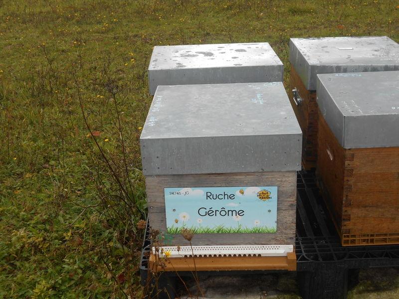 La ruche Gérôme