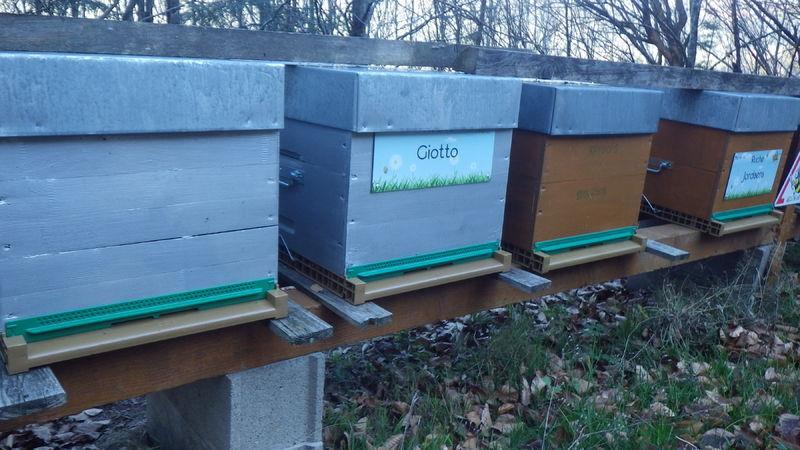 La ruche Giotto