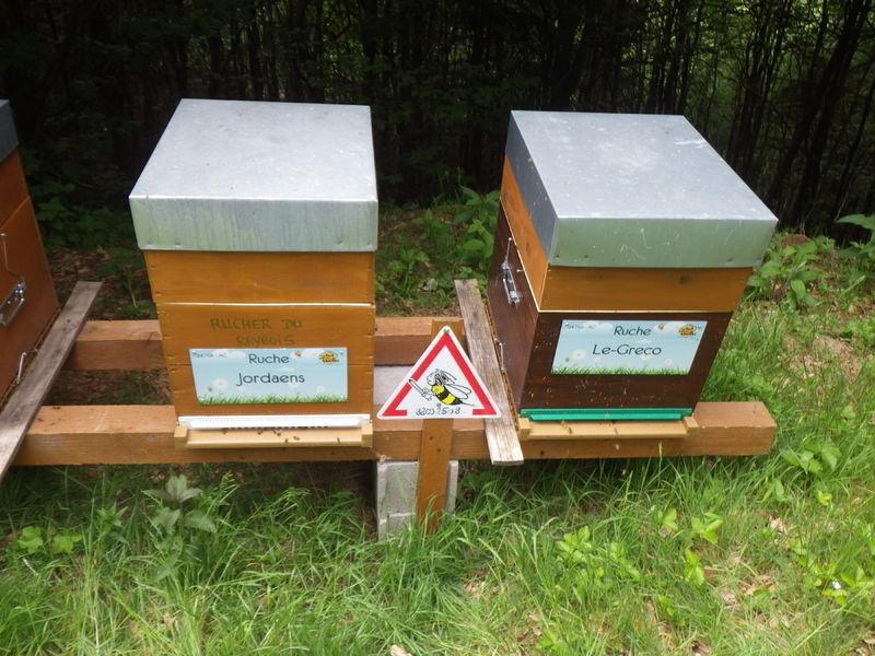 La ruche Jordaens