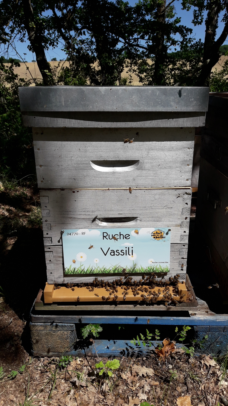 La ruche Vassili