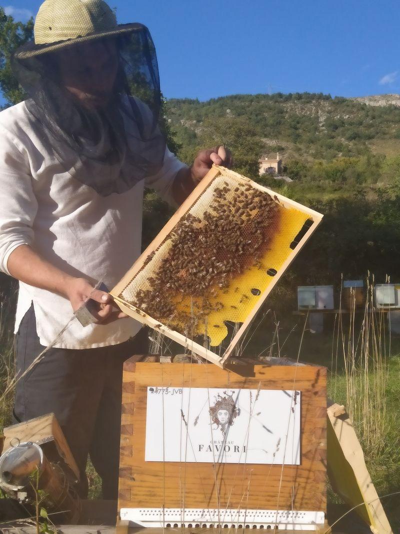 La ruche CHATEAU FAVORI