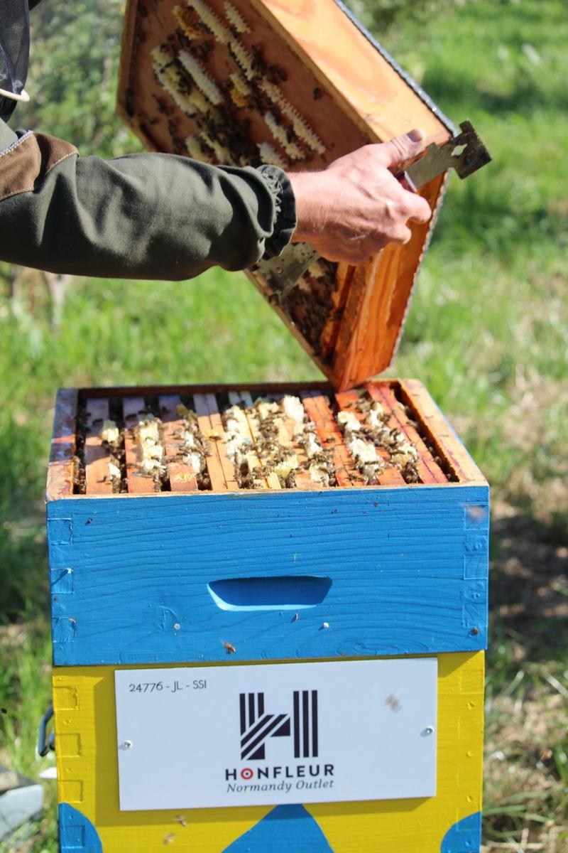La ruche Honfleur Normandy Outlet