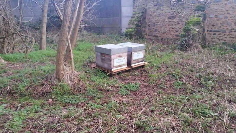 La ruche Mackintosh