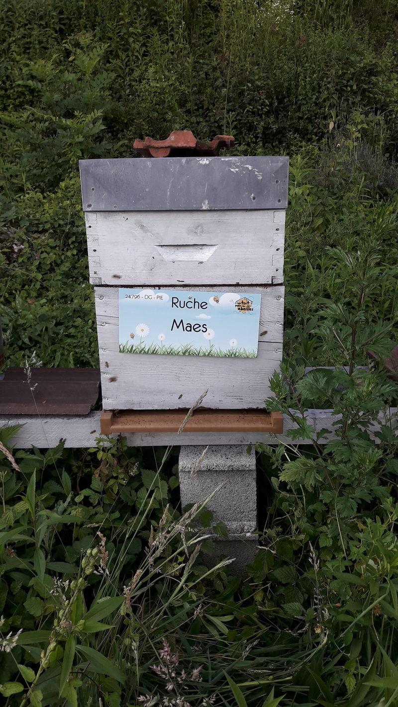 La ruche Maes