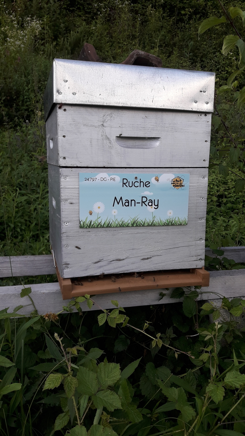 La ruche Man-Ray