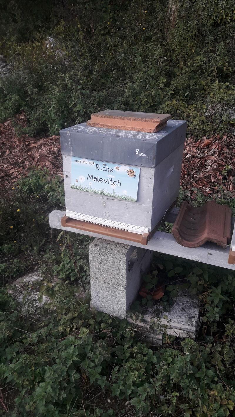 La ruche Malevitch