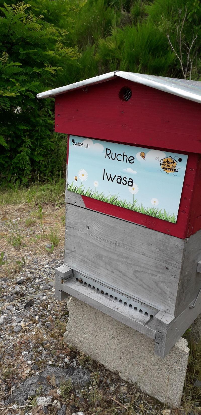 La ruche Iwasa