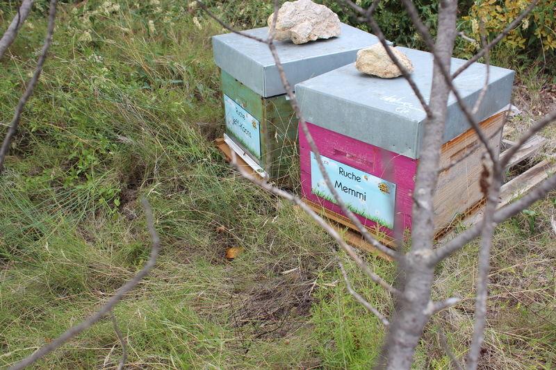 La ruche Memmi
