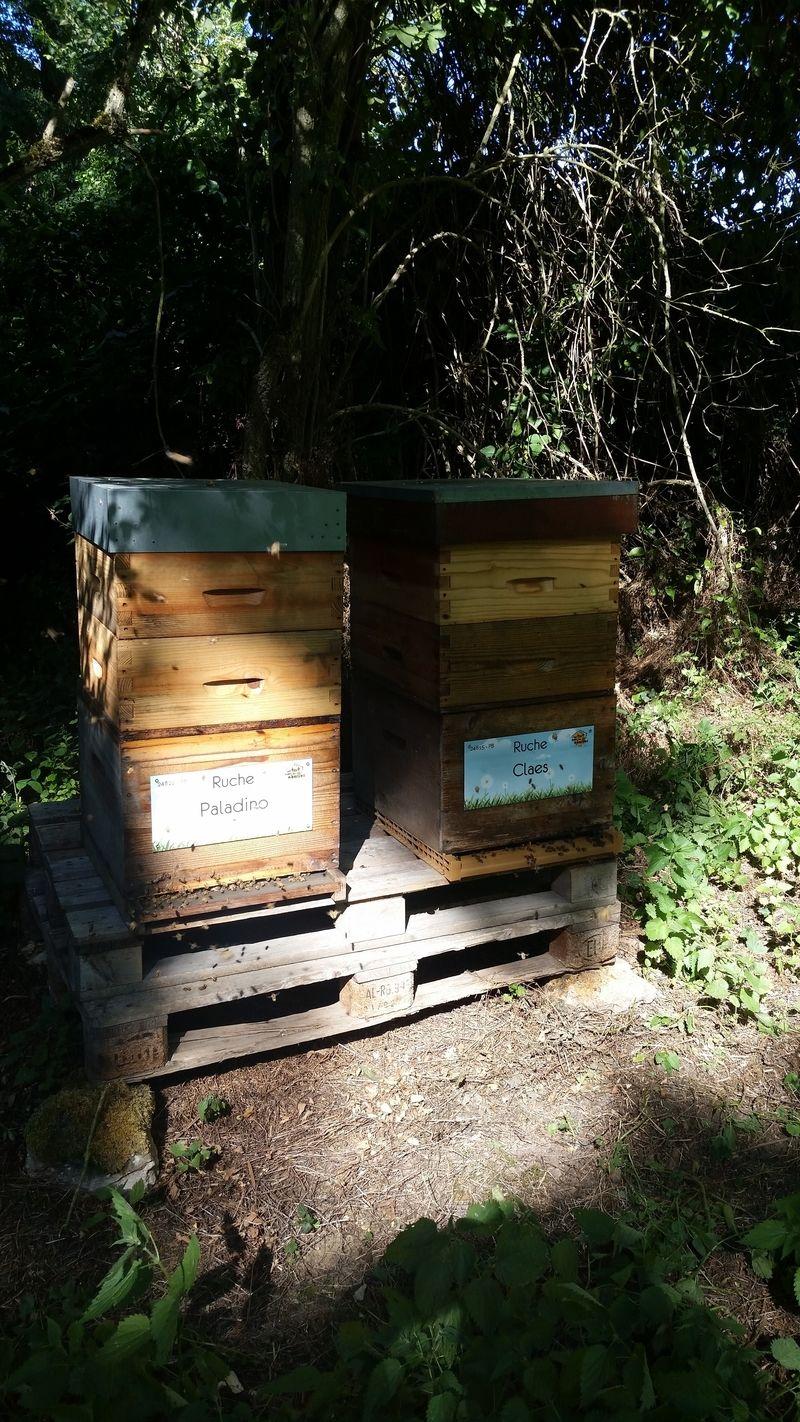 La ruche Claes