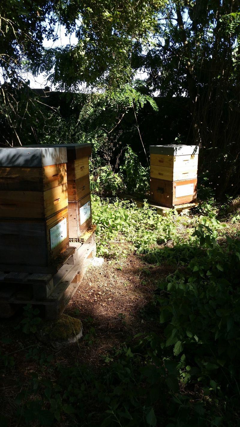 La ruche Paladino