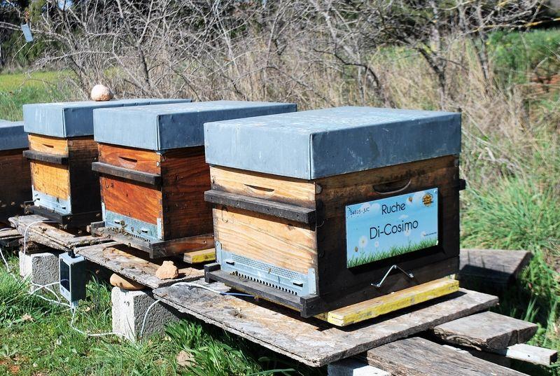 La ruche Di-Cosimo