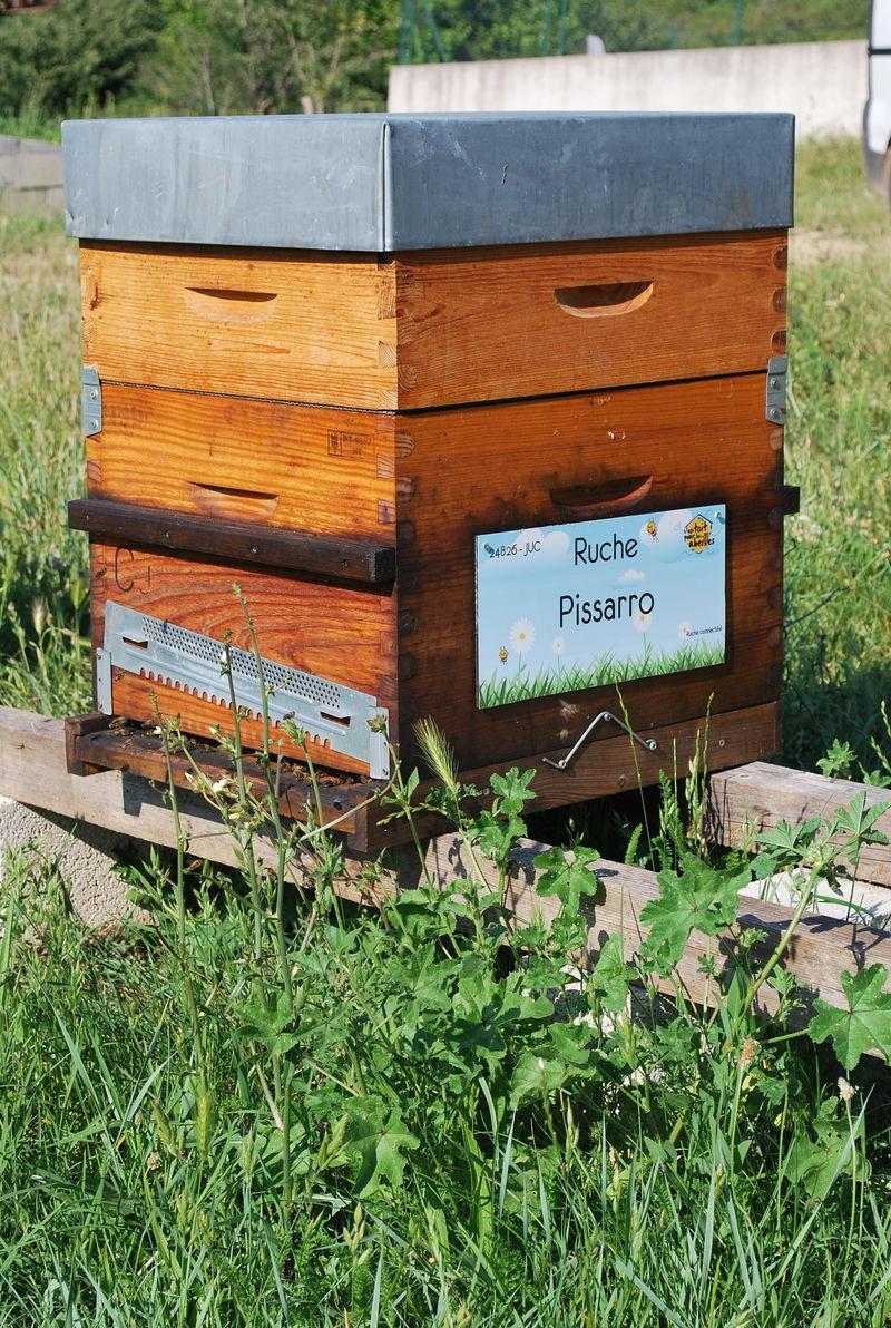 La ruche Pissarro