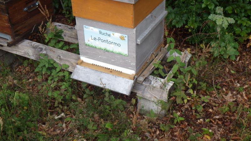 La ruche Le-Pontormo