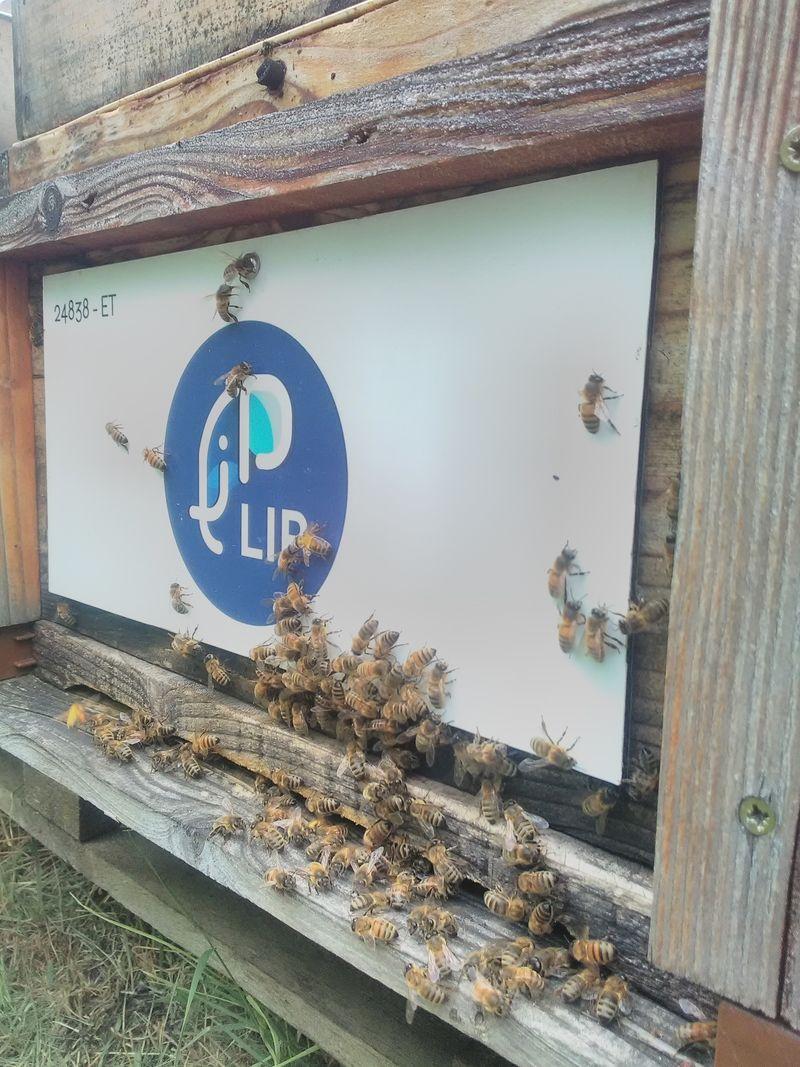 La ruche Lip events chez groupe lip