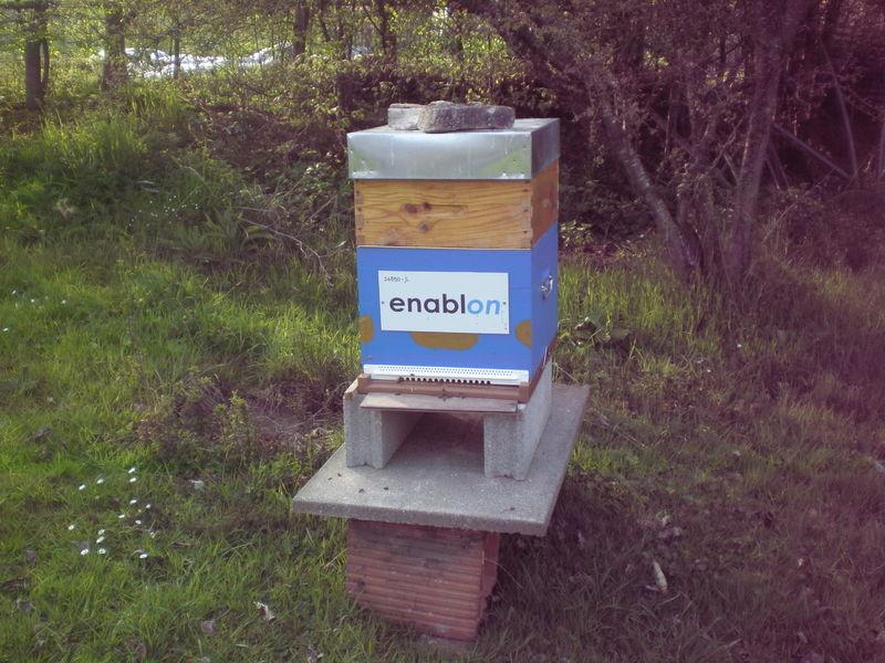 La ruche ENABLON