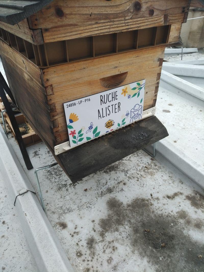 La ruche Alister