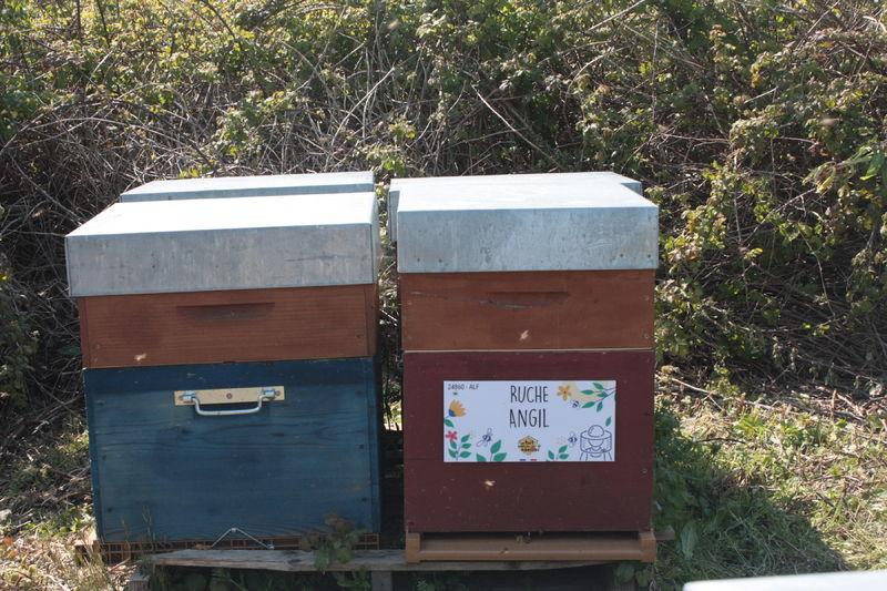 La ruche Angil