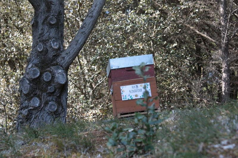 La ruche Aznavour