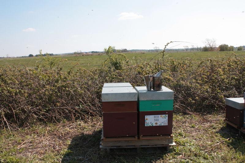 La ruche Badd