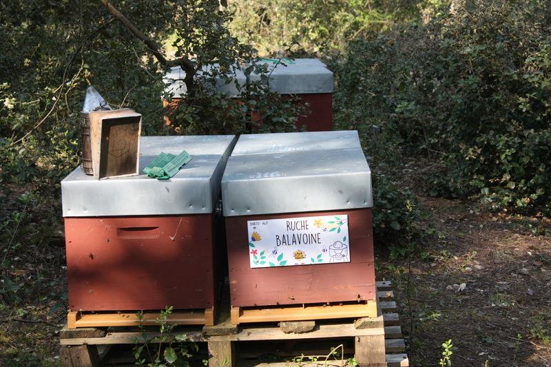 La ruche Balavoine