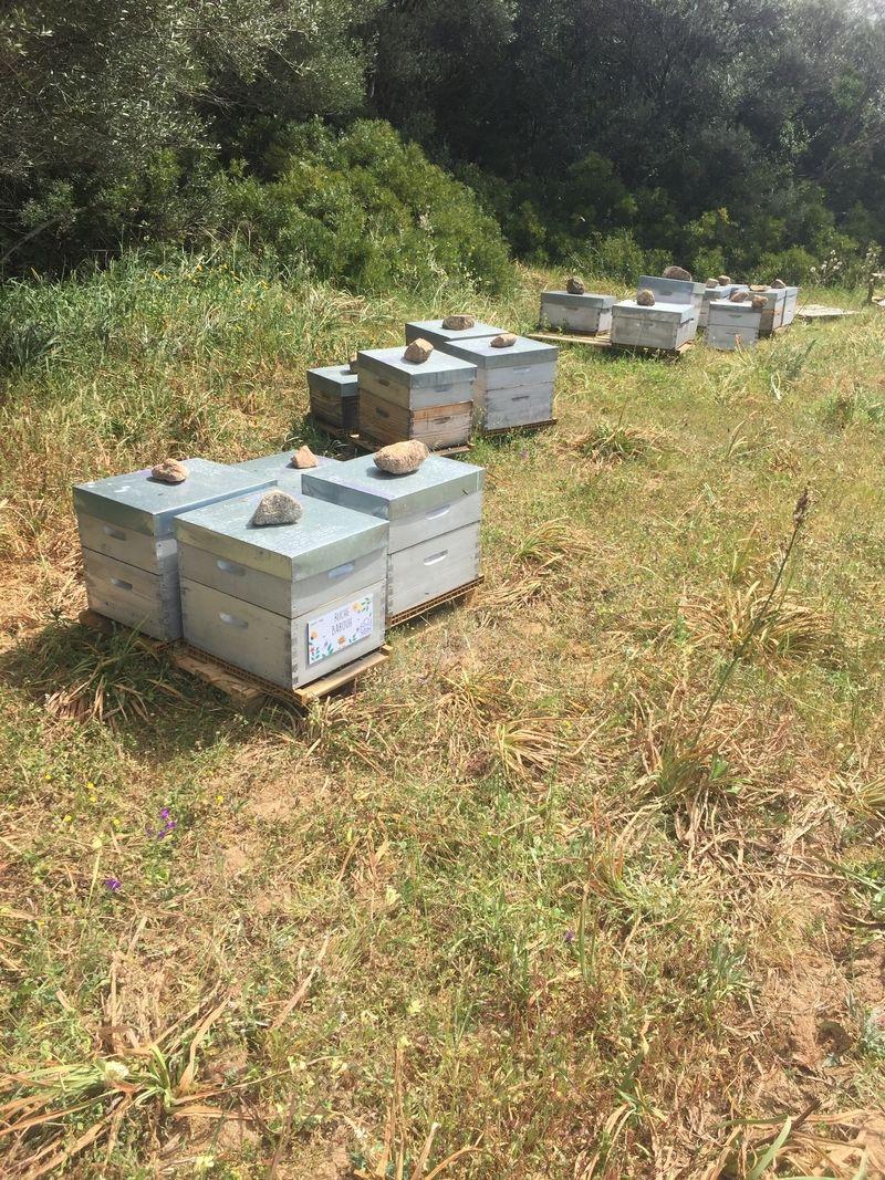 La ruche Barouh