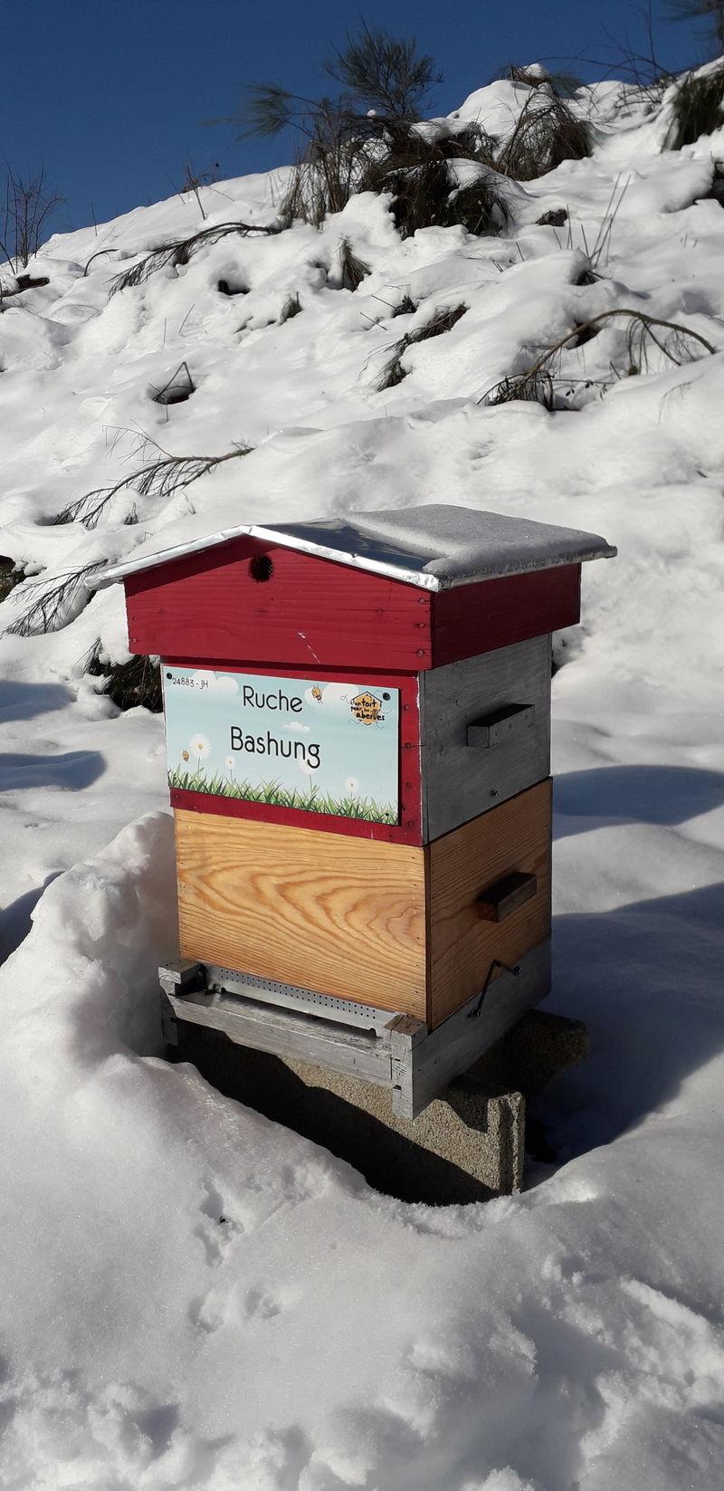 La ruche Bashung