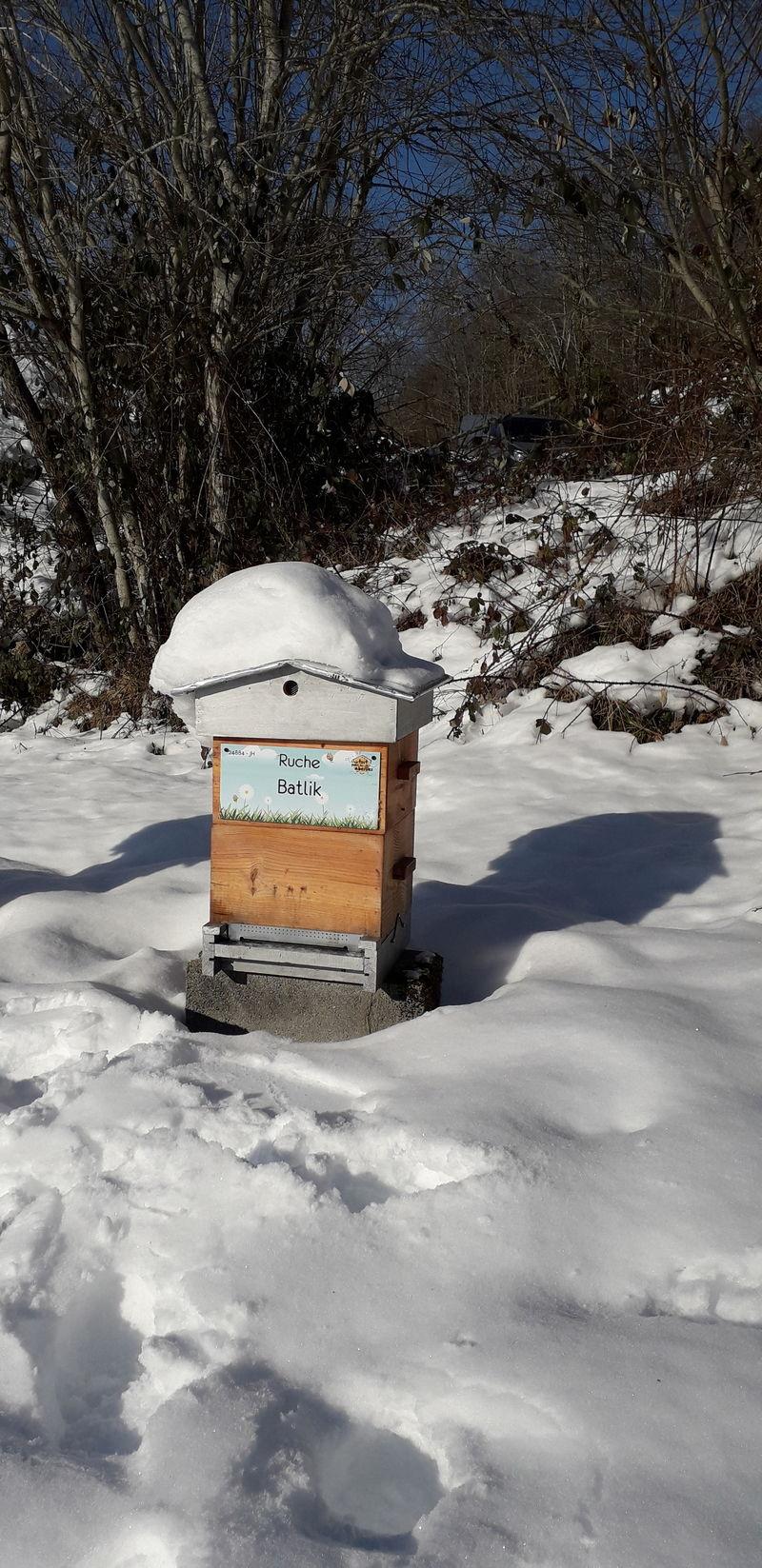 La ruche Batlik