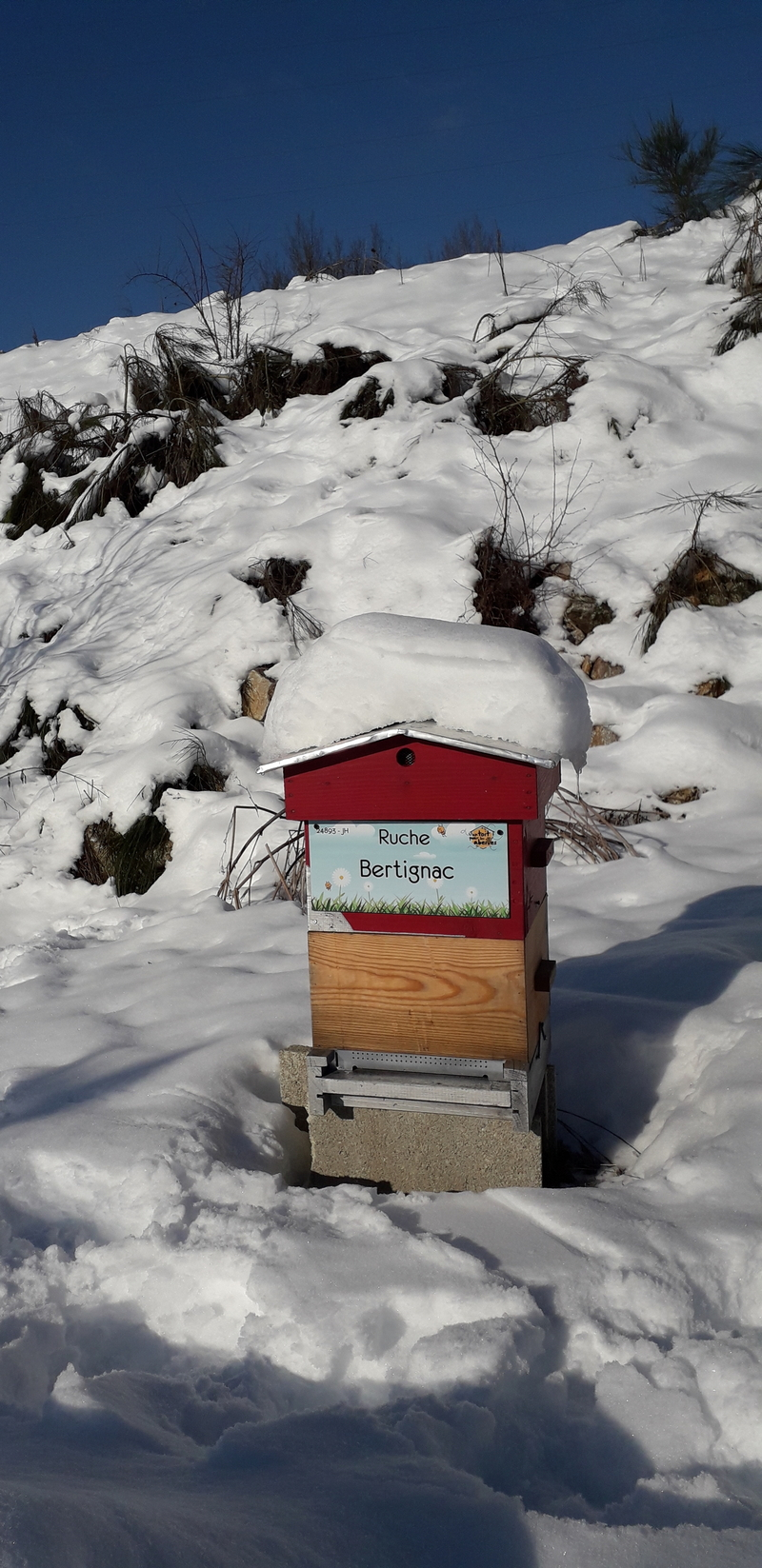 La ruche Bertignac
