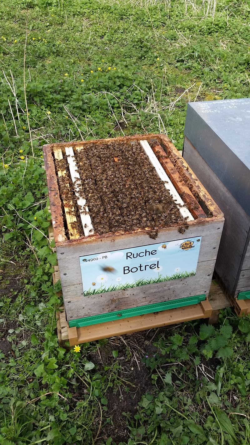 La ruche Botrel