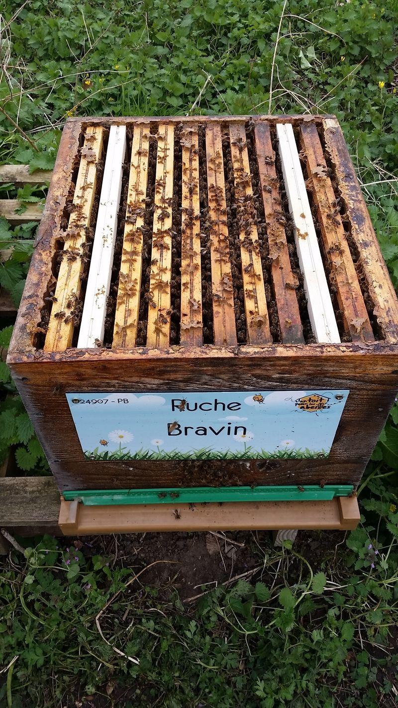 La ruche Bravin