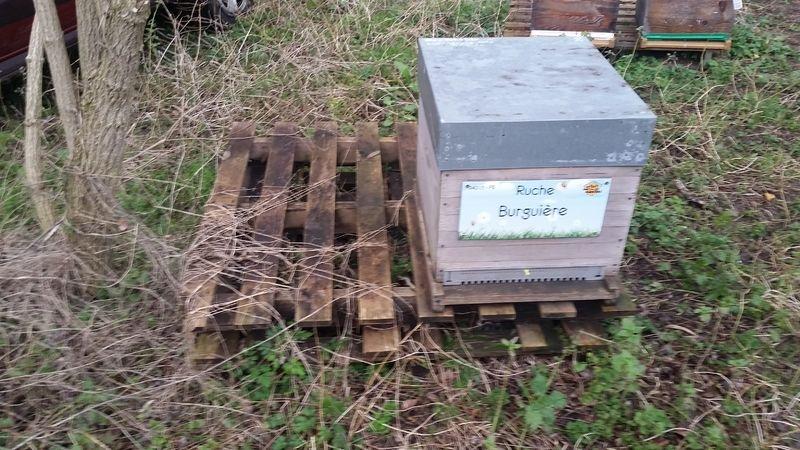 La ruche Burguière