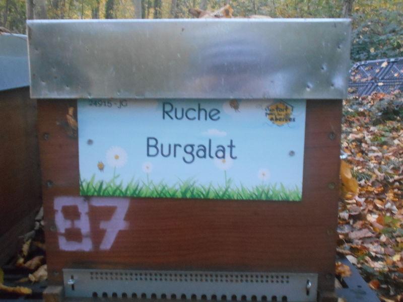 La ruche Burgalat