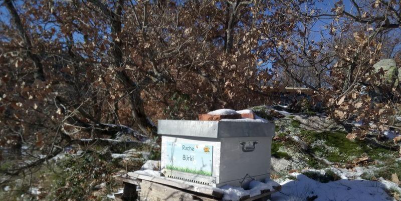 La ruche Bürki