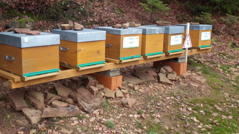 La ruche Cadé