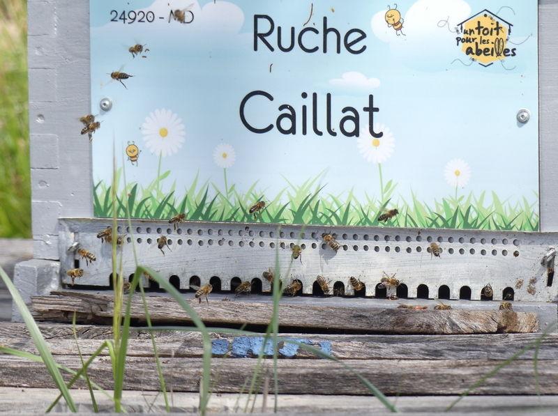 La ruche Caillat