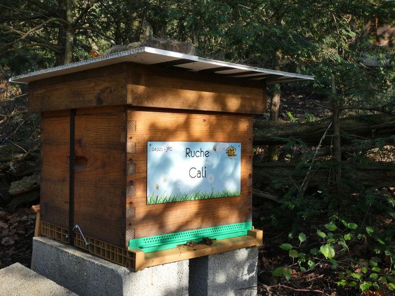 La ruche Cali