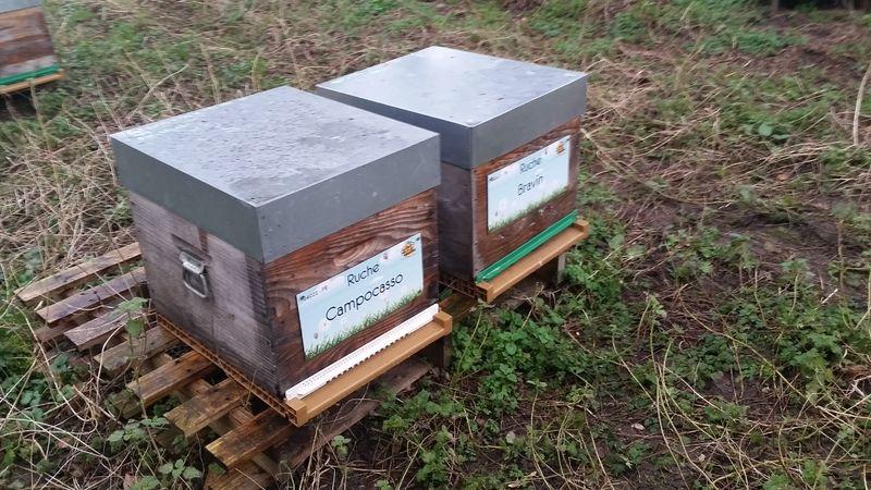 La ruche Campocasso