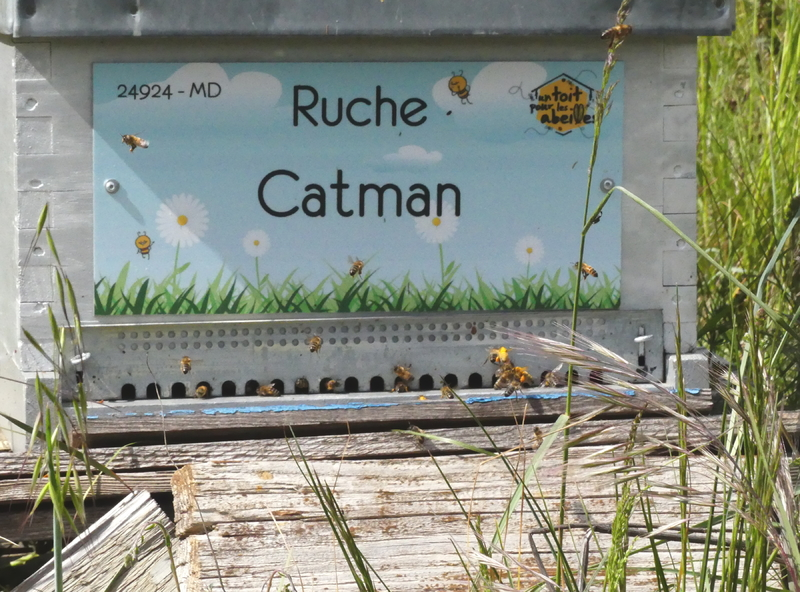 La ruche Catman