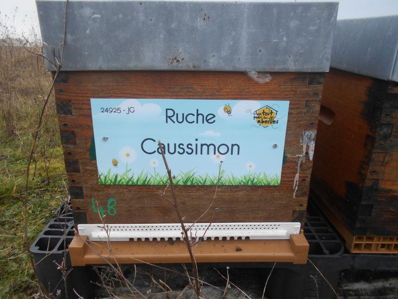 La ruche Caussimon