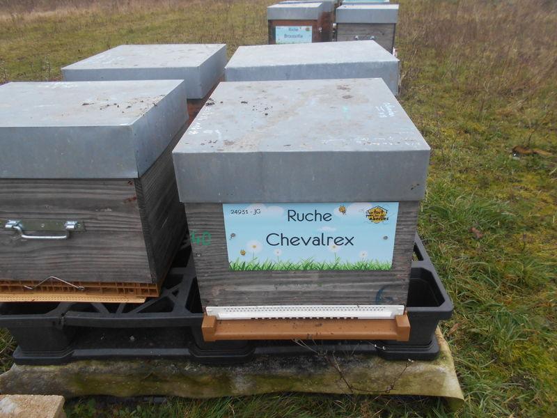 La ruche Chevalrex