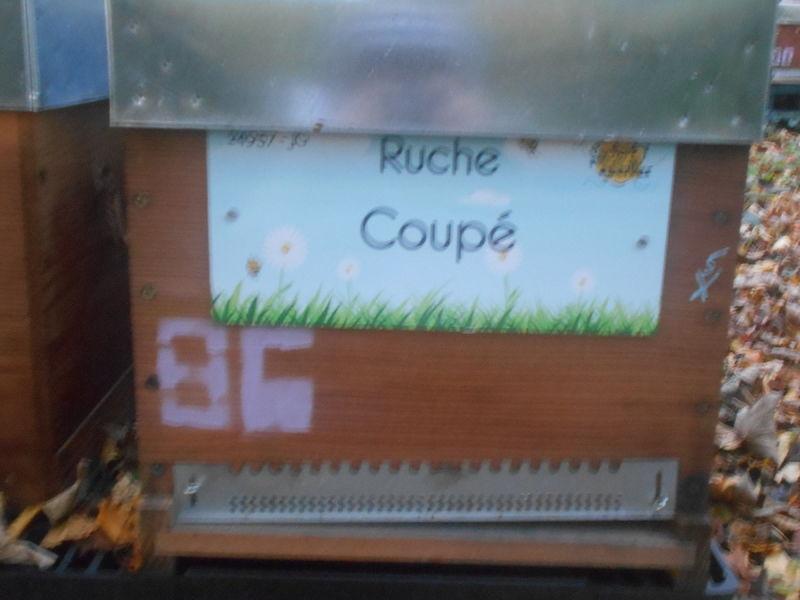 La ruche Coupé