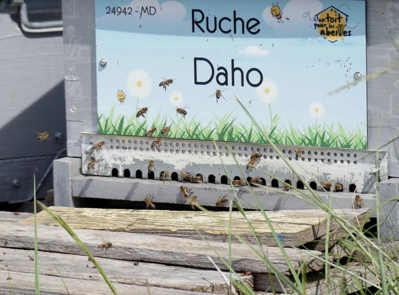La ruche Daho