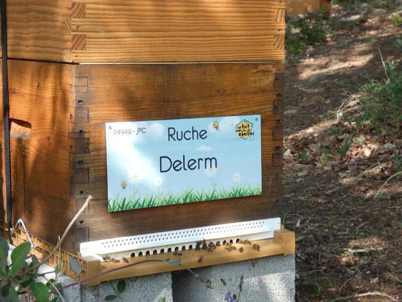 La ruche Delerm