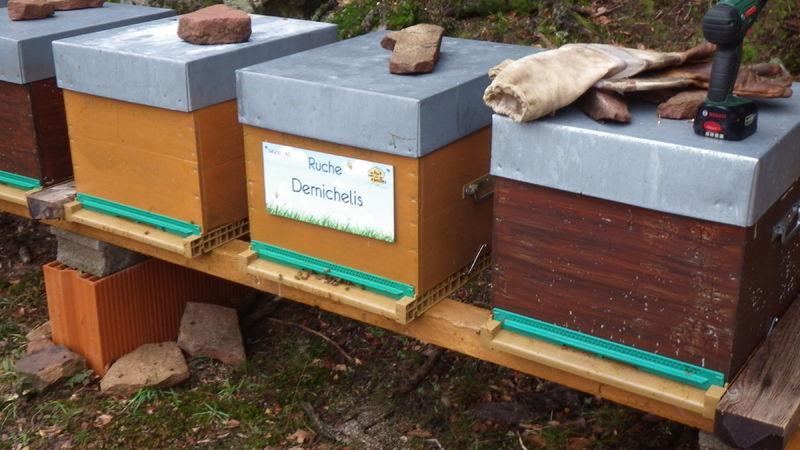 La ruche Demichelis