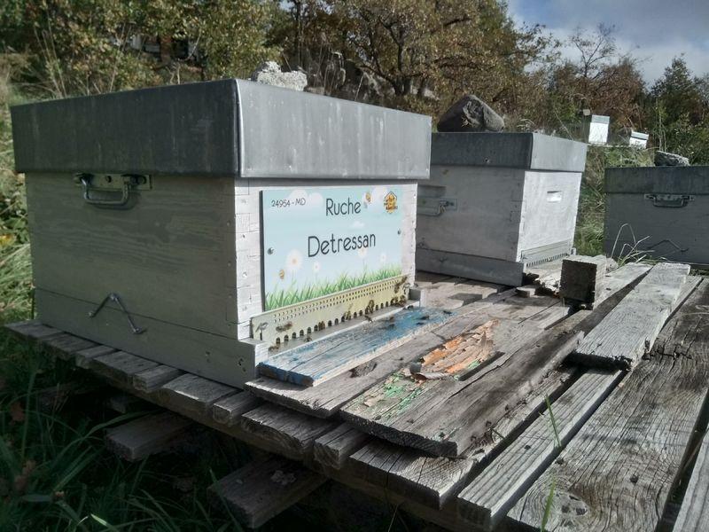 La ruche Detressan