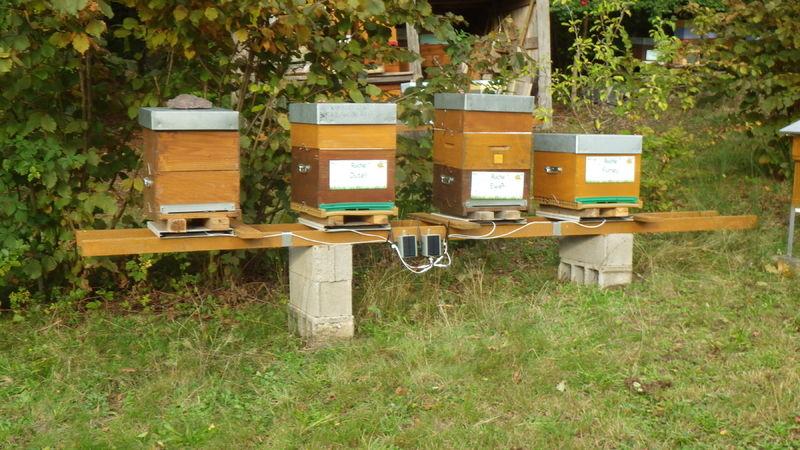 La ruche Duteil