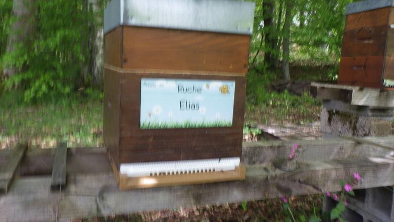 La ruche Elias