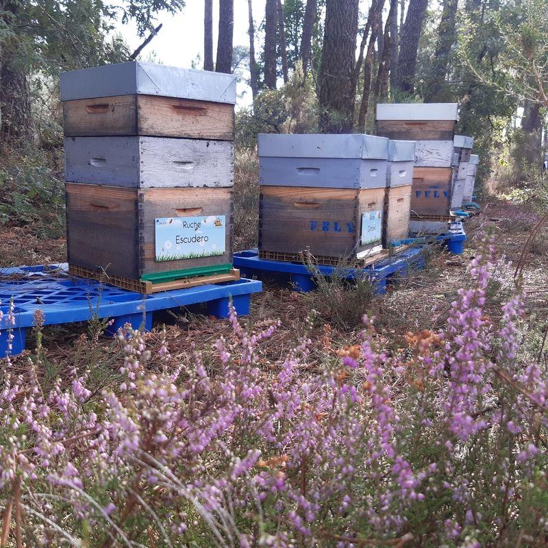La ruche Escudero