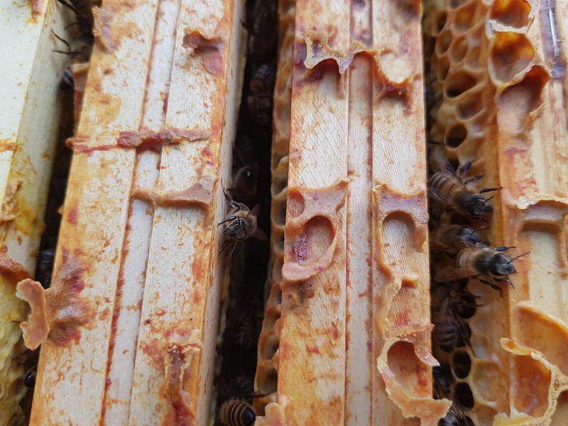 La ruche Facérias