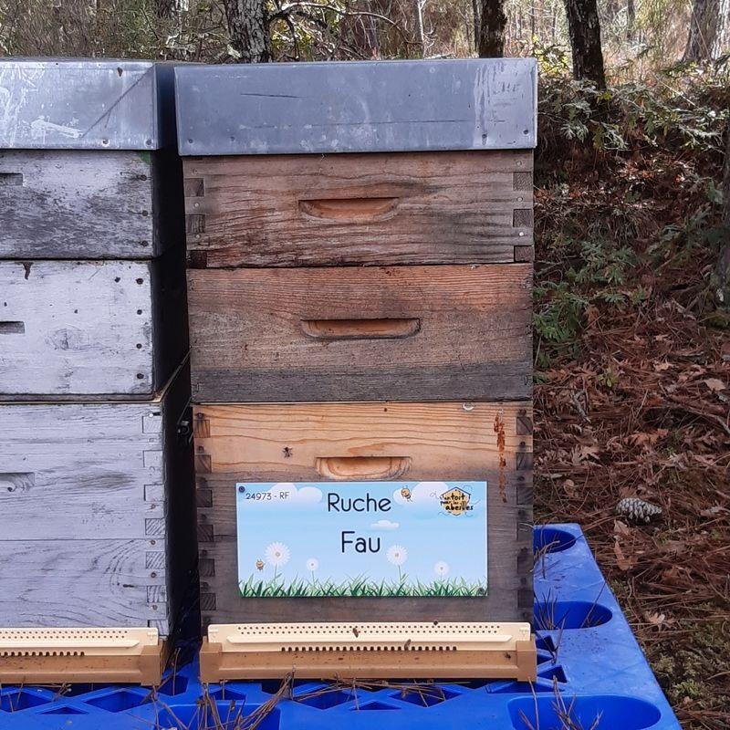 La ruche Fau